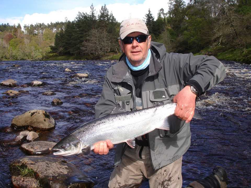 A fine springer from the Findhorn Scotland  April 2014