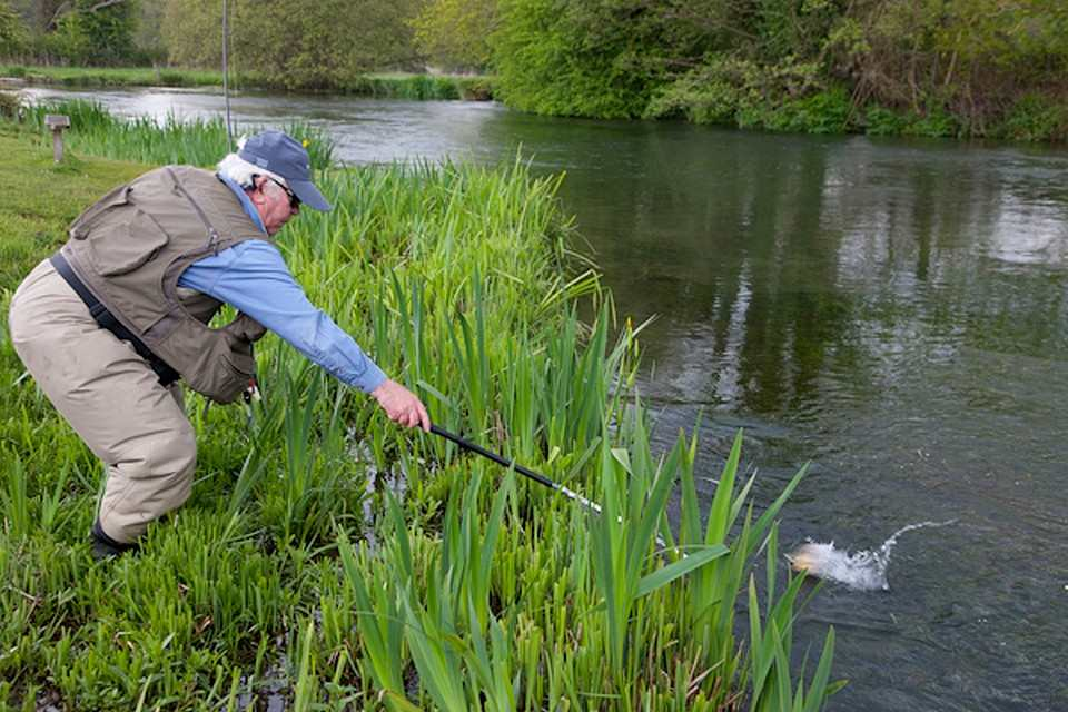 A good trout at the net on the Itchen