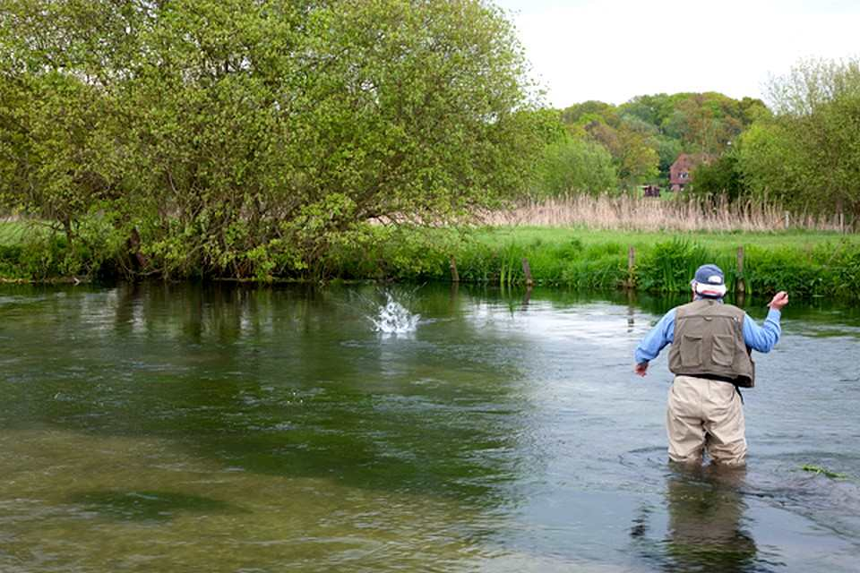 A lively fish on the Itchen
